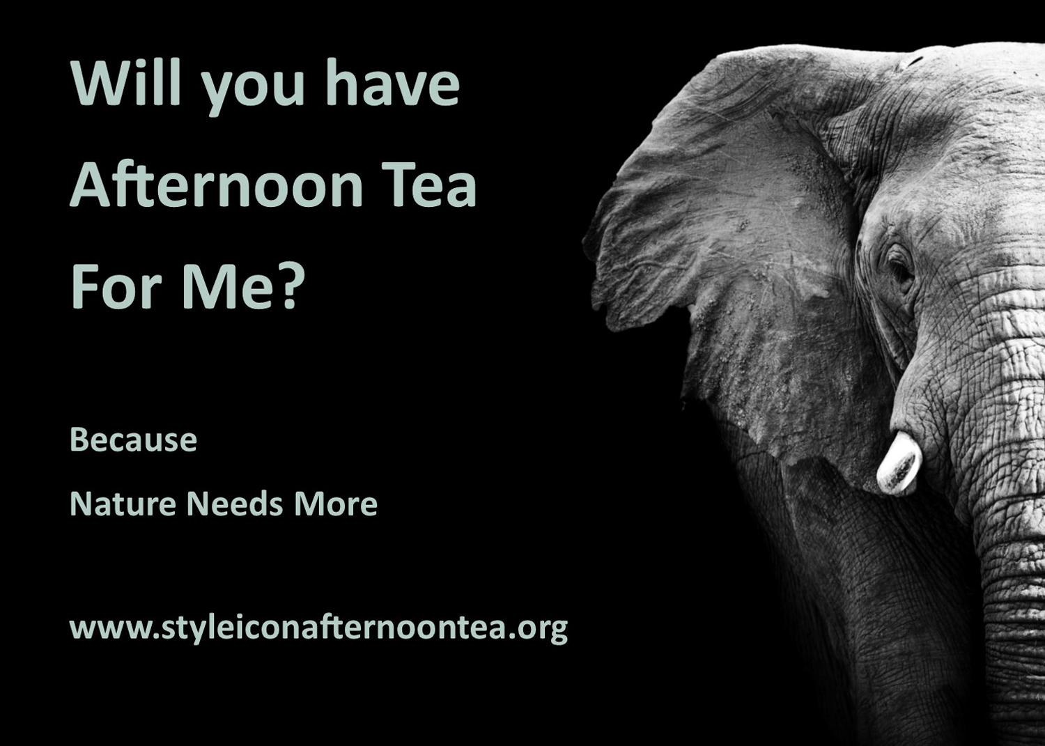 Will You Have Afternoon Tea For Me Elephant