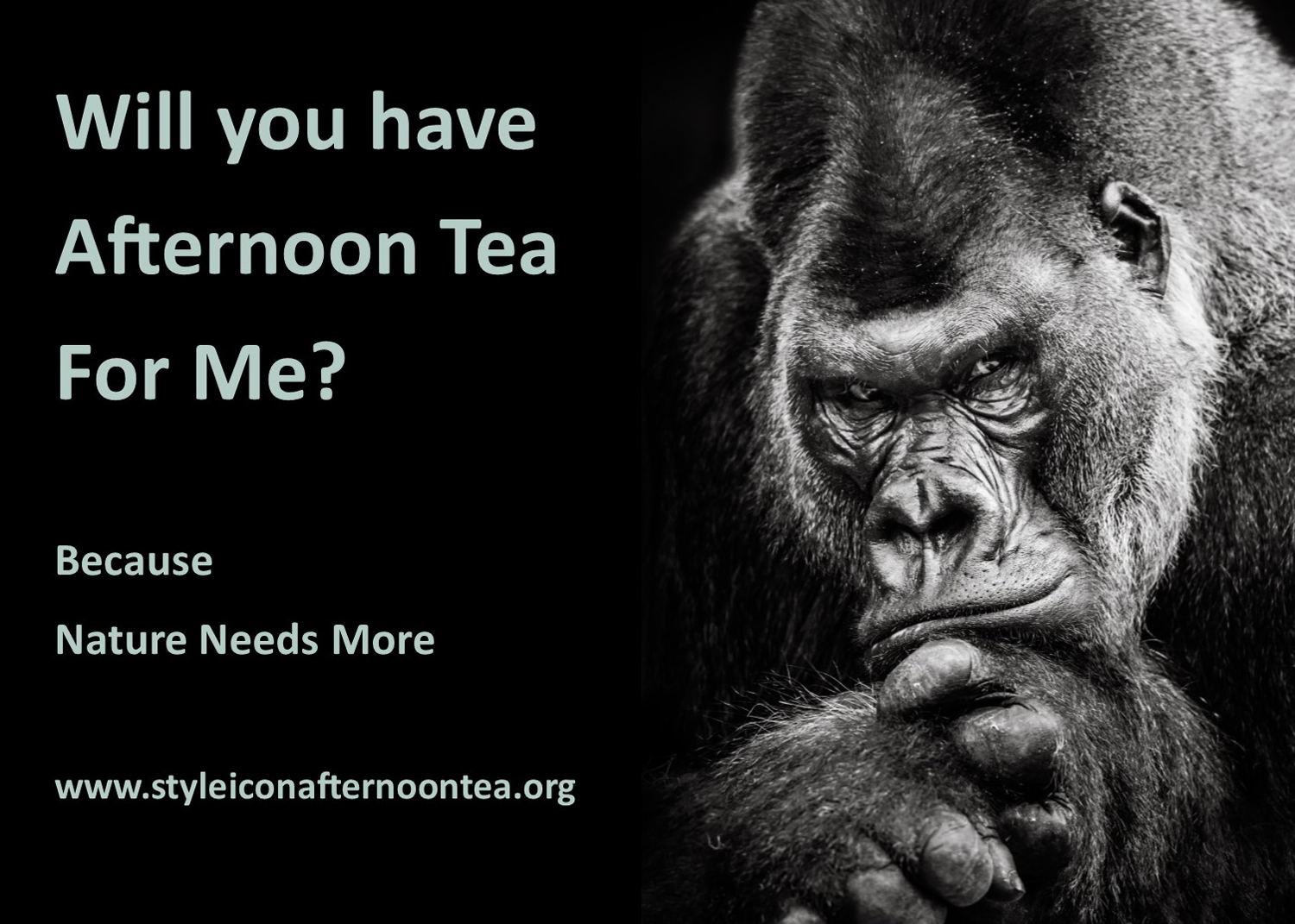 Will You Have Afternoon Tea For Me Gorilla
