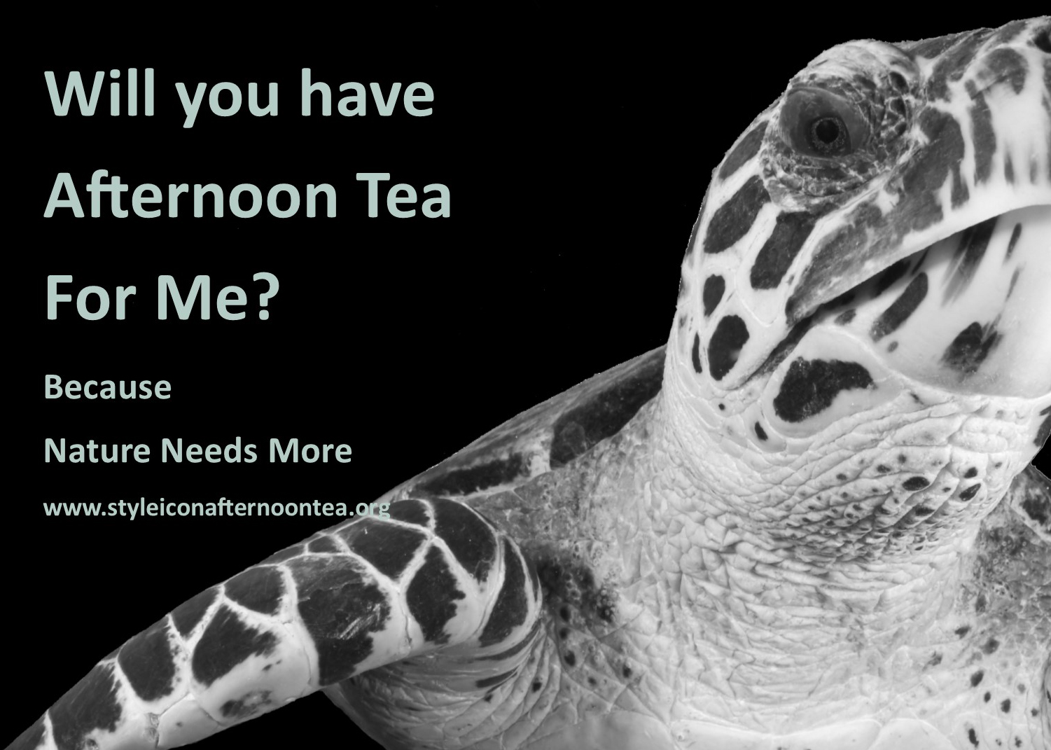 Will You Have Afternoon Tea For Me Turtle